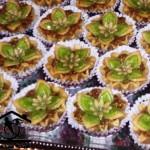 foodonia | qandilat-bestash